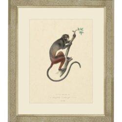 """Tavla """"Lemur monkey"""" – Grevinnans Butik & Inredning"""