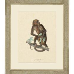 "Tavla ""Primordial monkey"" – Grevinnans Butik & Inredning"