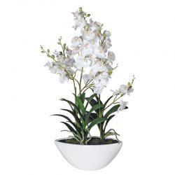 """Växt """"White Blush"""" – Grevinnans Butik & Inredning"""