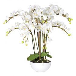 """Växt """"White Lindey"""" – Grevinnans Butik & Inredning"""