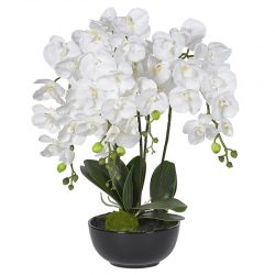 """Växt """"White Orchids"""" – Grevinnans Butik & Inredning"""